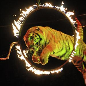 Цирки Хотынца