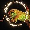 Цирки в Хотынце
